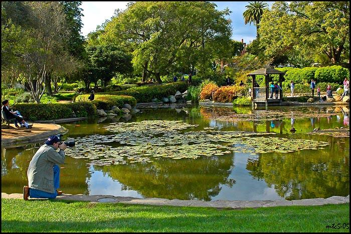 "Photog at Work, Santa Barbara, CA<br />MTC<br />Our hometown ""back yard."""