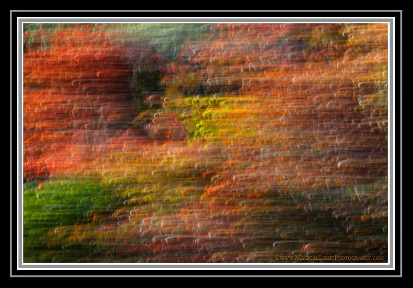 October 29, 2011<br />Dappled sunlight illuminates a colorful palette of changing fall colors in this artistic interpretation where a slow exposure is made while simul-taneously moving the camera.