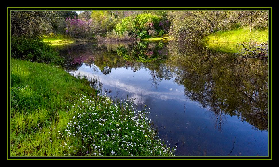 "Springtime comes to our peaceful pond - a life-giving oasis for all creatures great and small that call ""The Lodge"" their home.<br />Mariposa, CA       March 19, 2016"