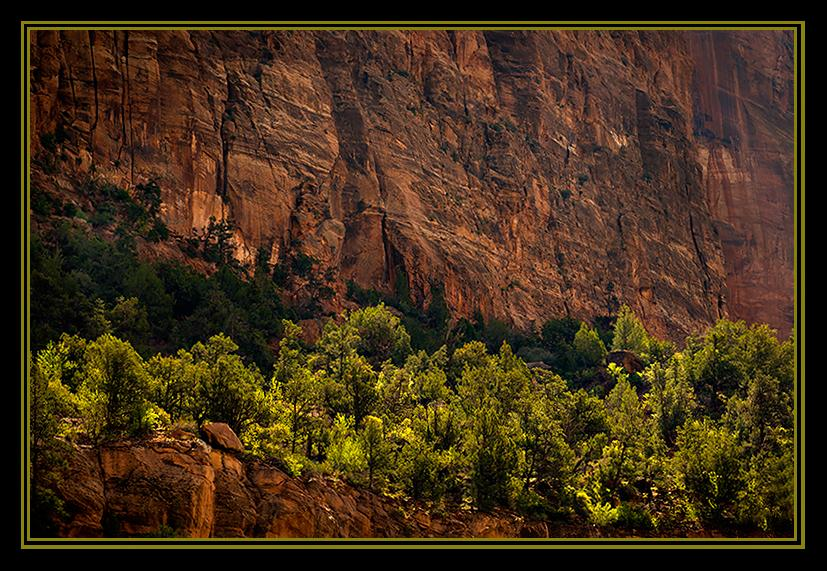 Rich Spring greens contrast with burnt umbra rock background in Utah's Zion National Park.
