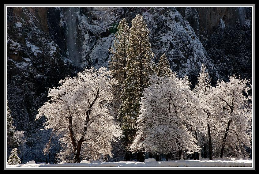 Crisp, 24 degree morning air and brilliant sunlight make the oak and pine trees below Bridalveil Fall (upper left) appear to be dusted by the Celestial Baker with sweet powdered sugar, just in time for the Christmas season!